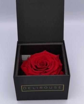 Rosa Gigante Preservada en España Envío Gratis #1 Delirouse