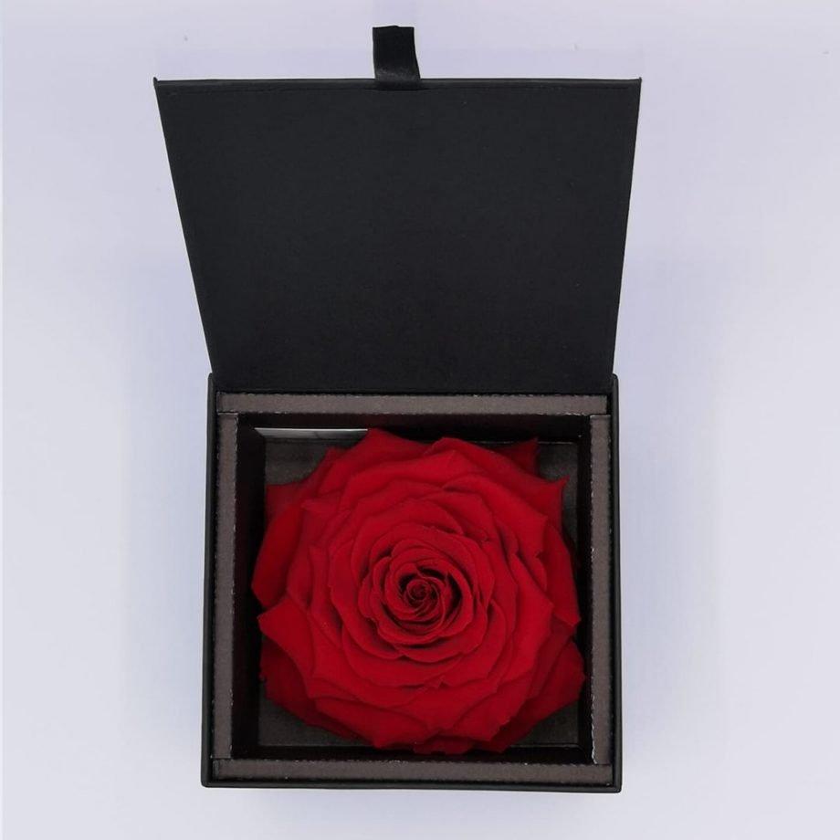 Rosa Gigante Preservada
