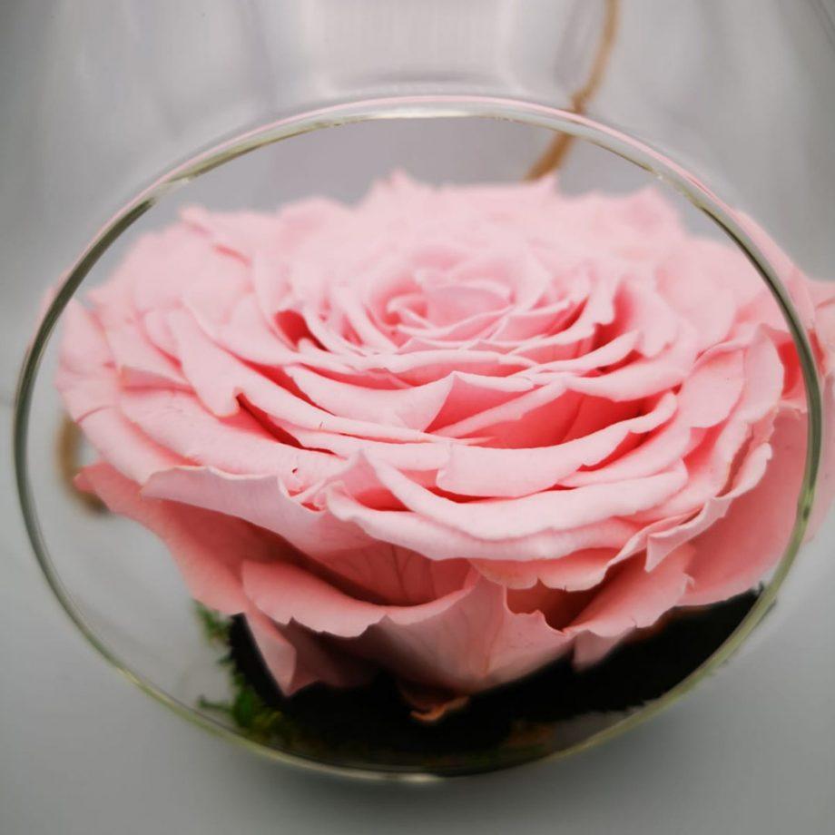 Cristal Gota de Agua con Rosa Eterna Gigante