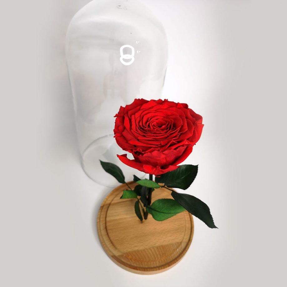 Cúpula Grande con Rosa Eterna Gigante