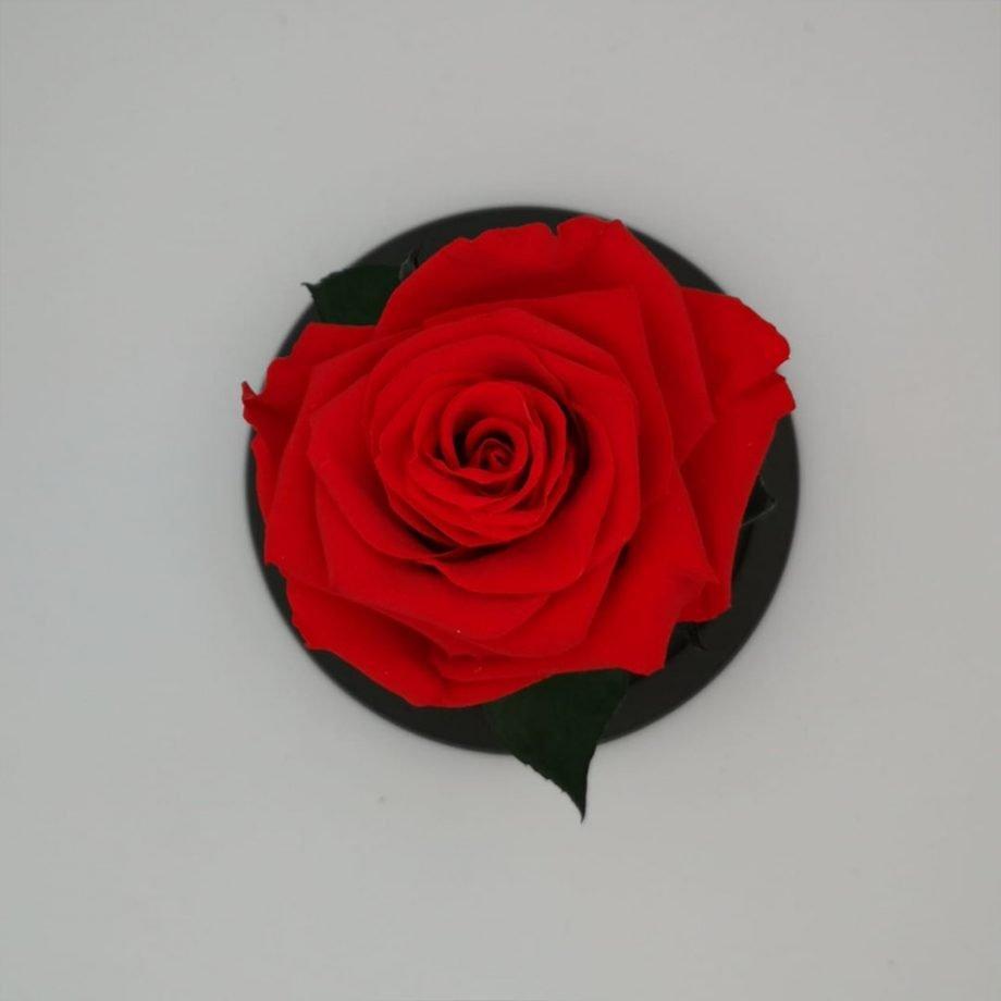 Cúpula Mediana con Rosa Eterna Mediana