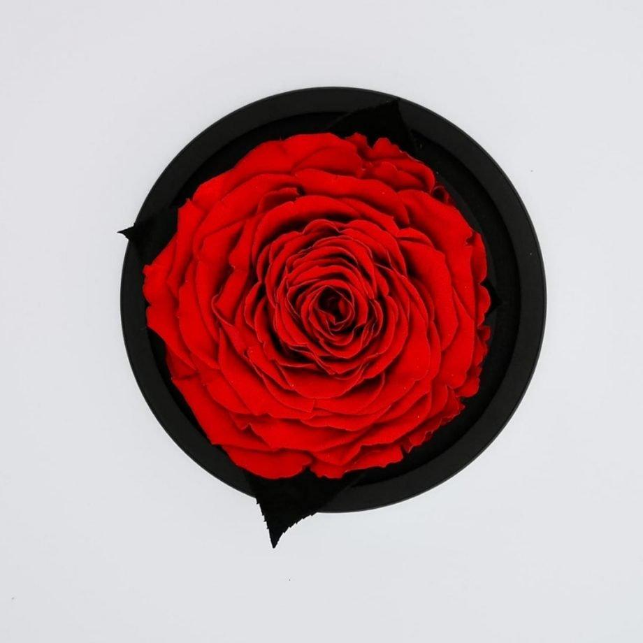 Cúpula Pequeña con Rosa Eterna Gigante